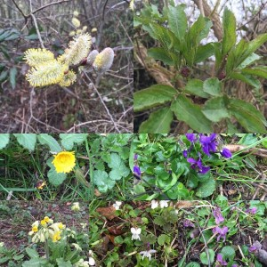 A walk in early Spring #spring #wildflowers