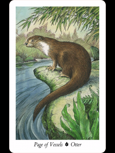ottercard