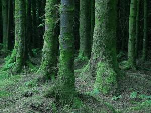 800px-Dark_mossy_forest