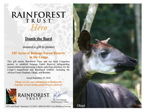 Good News for the Rainforest