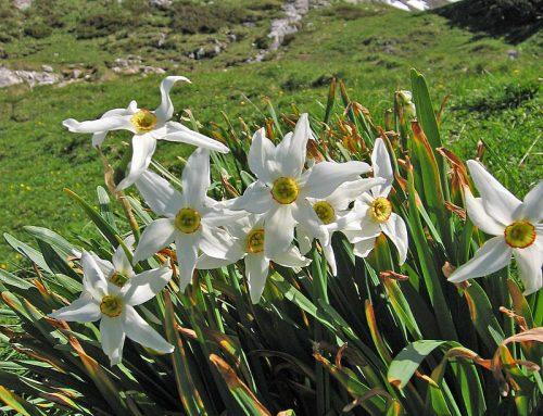Spring. It's here. Honest Guv.