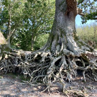 DruidCast – A Druid Podcast Episode 174